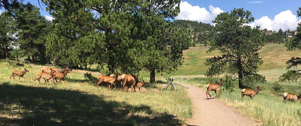 elk-meadow-park